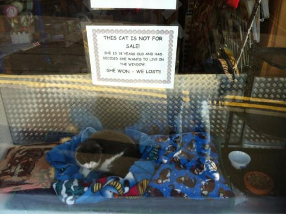 Stubborn Cat Living in a Shop Window in the Scottish Borders (Image via Redditi, posted by bigboyfox)
