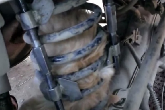 Cat Caught in Car Spring (You Tube Image)