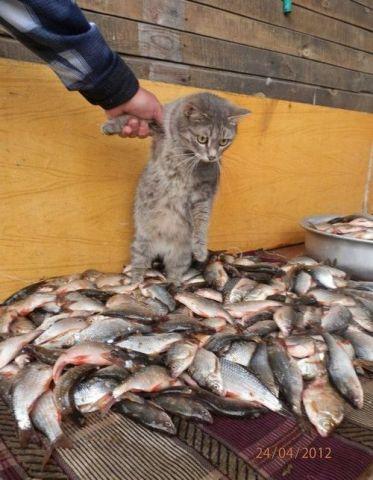 Kitty Dream Come True (Photo via Tumblr)
