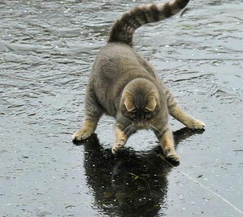 Cat Attacking Shadow (Image via CatsLand, Photo by Mats Hamnas)