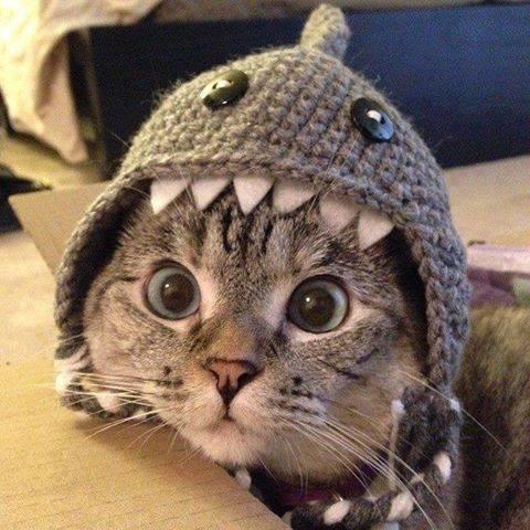 Shark Cat (Image via Moodý Photography)