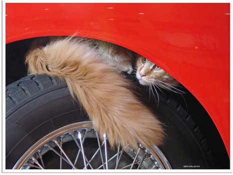Pets are exposed to ethylene glycol that leaks from vehicles on streets and in driveways
