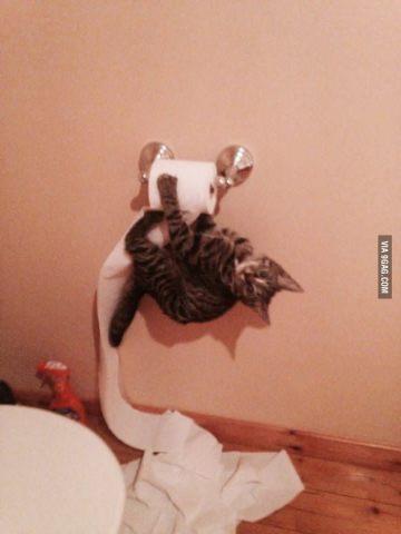 Naughty Kitty Busted (Photo via 9GAG)