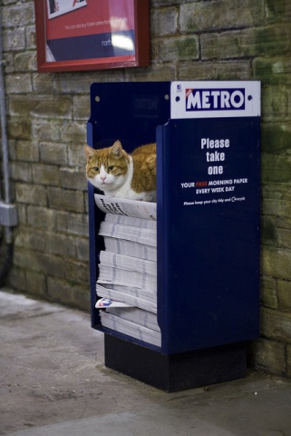 Newspaper Cat (Image via Flickr)