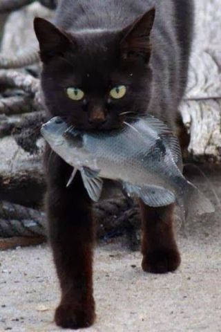 Cat with the Catch of the Day (Image via Imgfave)