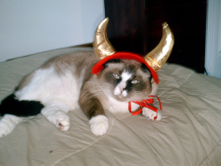 Cat with devil horns