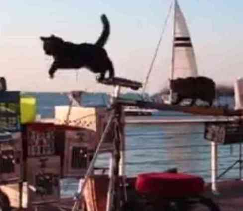 The Catman And His Flying Cats (You Tube Image)