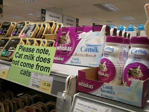 Catmilk: Milk FOR Cats, Not FROM Cats