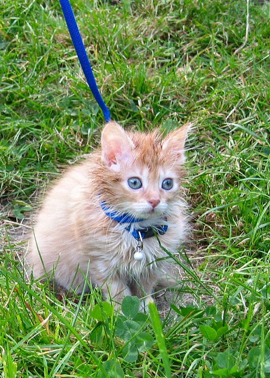 The Top 10 Cats On Leashes