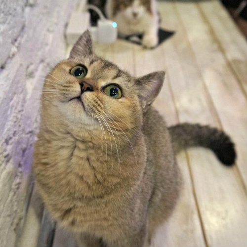Easing stress in cats