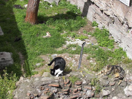 Cats Among the Ruins of Largo di Torre Argentina (Photo by Wknight94/Creative Commons via Wikimedia)