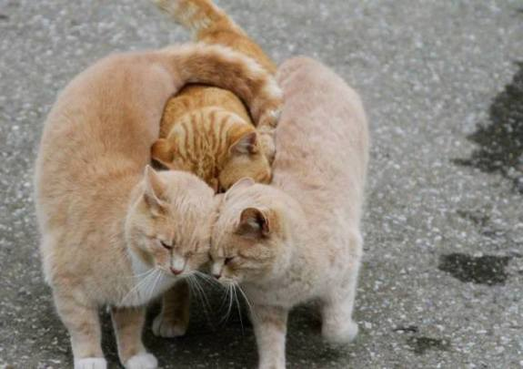 Kitty Group Hug (Photo via La Bioguia)