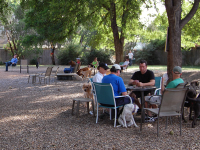 Men playing cards at a dog park