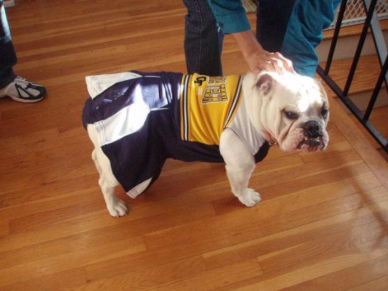 Bulldog as Georgia Tech Cheerleader (Public Domain Image)