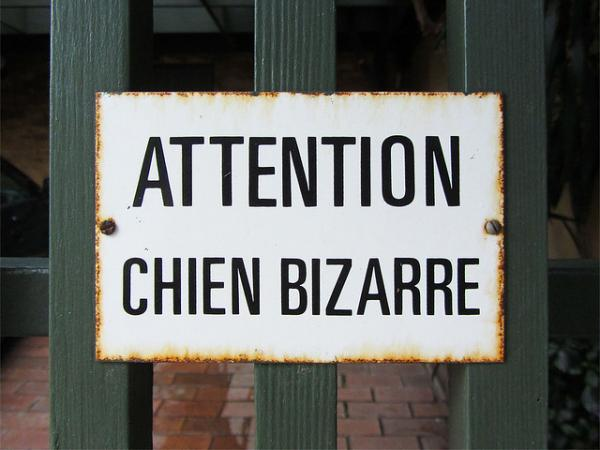 What's up with these Chat Bizarre and Chien Bizarre signs?