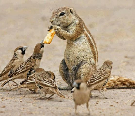 Chipmunk and Sparrrows Lunching Together (Photo via La Bioguia)