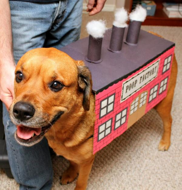 Drop Shipment: The Top 10 Canine Poop Factory Costumes