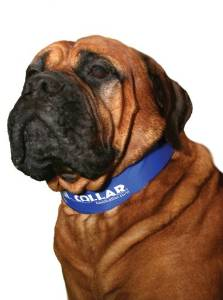 Cool Collars for Dogs
