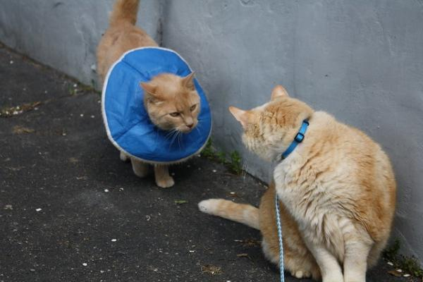 The Top 10 Dog & Cat Cones Of Shame