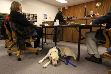Courthouse Dog Assisting a Witness (Photo by Atsuko Otsuka/Creative Commons via Wikimedia)