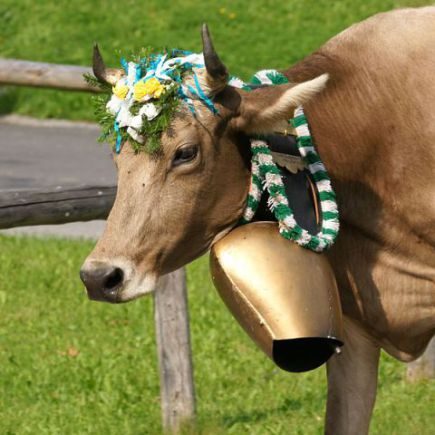 Cow With Traditional Bell (Photo by bohringer friedrich/Creative Commons via Wikimedia)