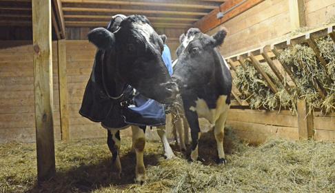 Tricia and Sweety (Image via Farm Sanctuary)