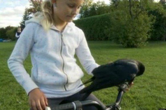Walter the Crow and Livia Renaud (Images via You Tube)