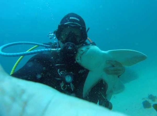 Shark & Diver Share Seven-Year Friendship