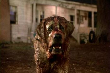A rabid dog as written by Stephen King...can it get any worse?