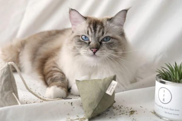 The 'Cuppa Tea' Catnip Teabag Toy