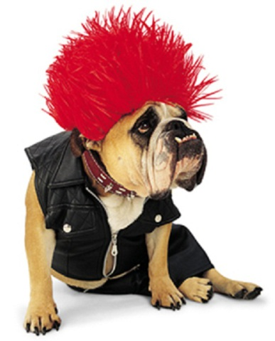 Punk Rocker dog costume