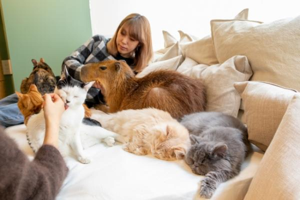 Cats, Capybaras & Coffee Combine At The Capyneko Cafe