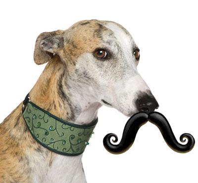 Humanga Stache Dog Toy: via Think Geek