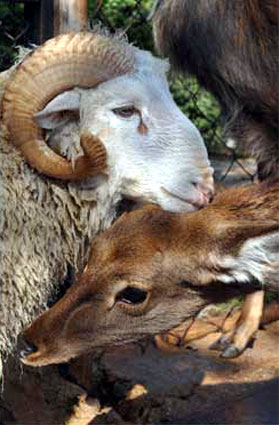 The Ram, 'Long Hair,' and the Deer, 'Junko': image via shanghaiist.com