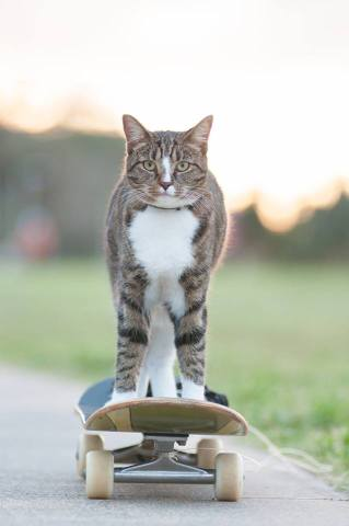 Didge the Skateboarding Cat (Image via Facehook)