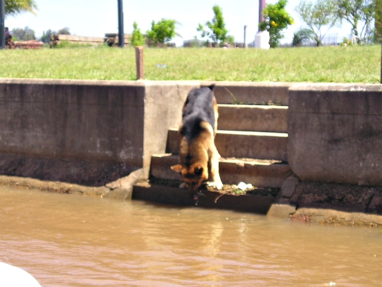 don't let pets drink run-off or storm water
