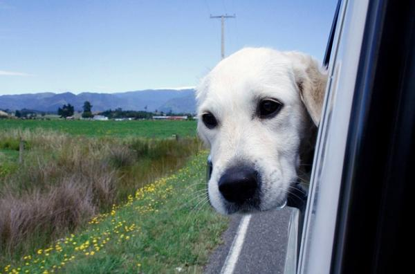 BringFido travel with pets