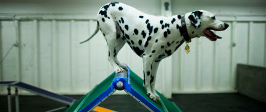 Zoom Room, dog agility training: © Zoom Room