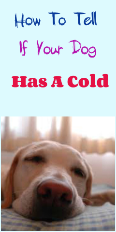 How To Tell If Your Dog Has A Cold