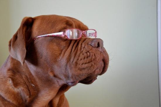 آیا سگها رنگ ها را می بینند؟