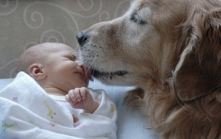 Though so precious a picture, dogs should not be permitted to lick an infant or an infirm or elderly person on the face: image via poisonedpets.com