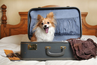 Common scene when you think you're leaving home...: image via dogvacay.com