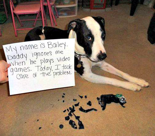 dog shaming image of pet who ate remote control