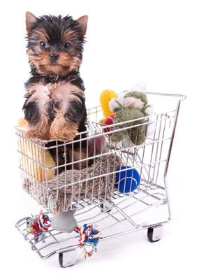 It's a dog's world!: image via smalldogsrus.com