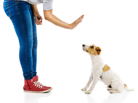 Retrain your dog