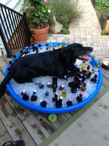 Dog Chilling on Ice (Image via Imgur)