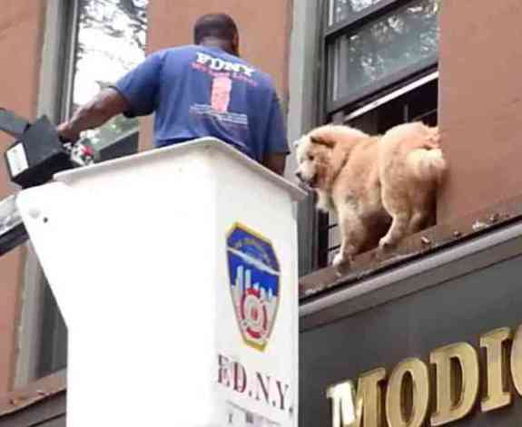 Fireman Makes Friend With Terrified Dog (You Tube Image)
