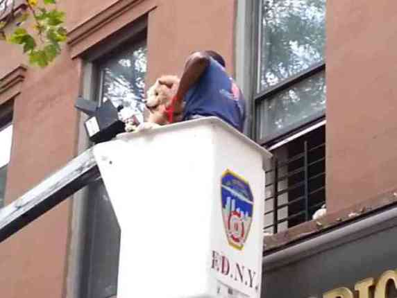 The Fireman Pulls The Dog To Safety (You Tube Image)