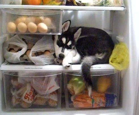 Leftover Dog (Image via Dog Bless You)