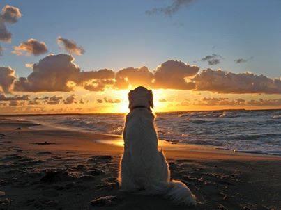 Dog in the Sunset (Image via La Bioguia)